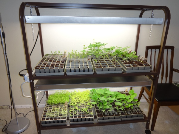 seedlings ahoy!